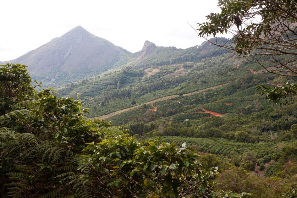 Landschaftsaufnahme der Fazendas Dutra. Blick durch Büsche auf Kaffeefelder und eine Bergkuppe.